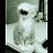 kat cannella avatar image