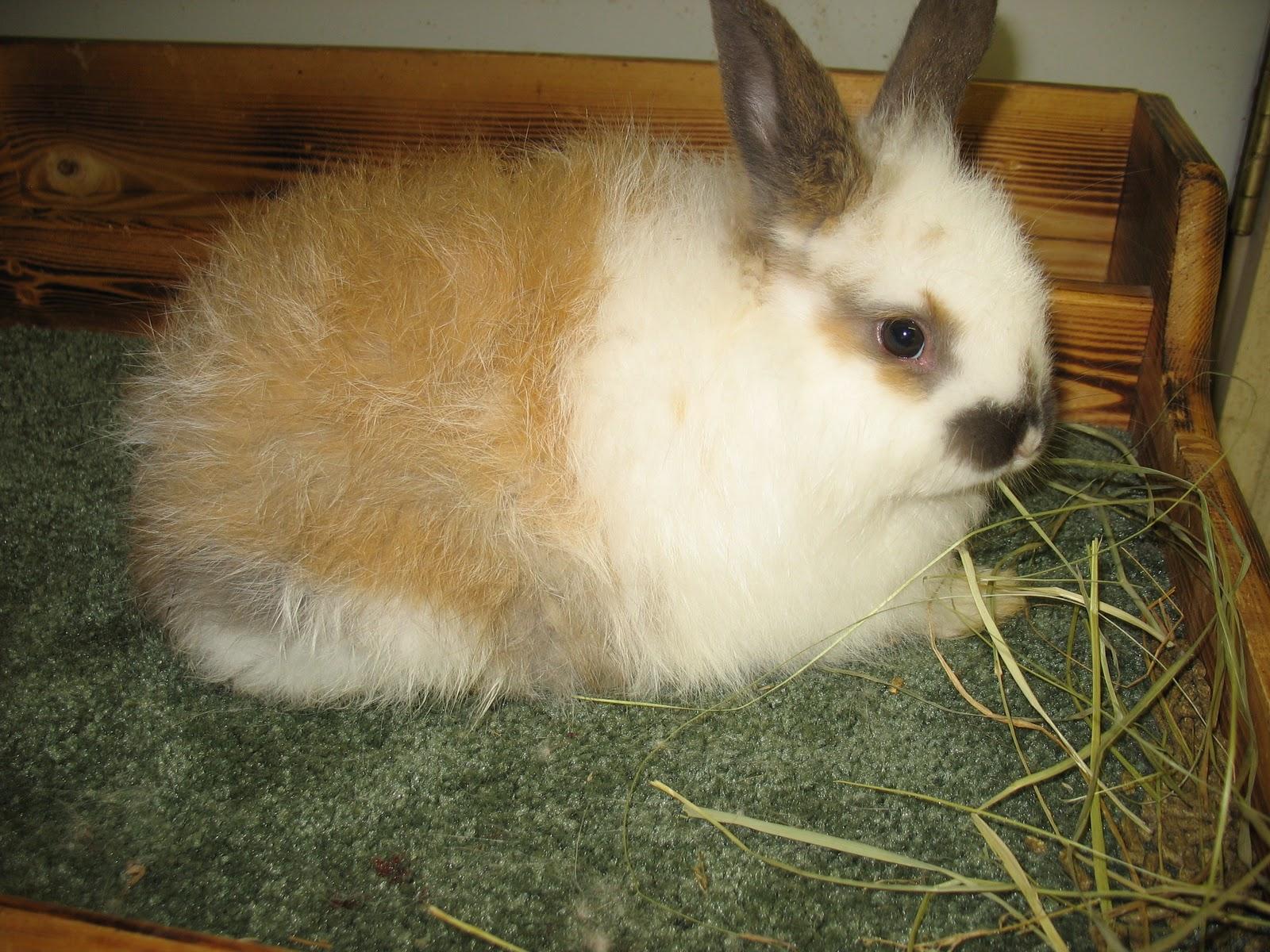 Walnut Springs Farm: Rabbits