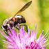 Insectos de primavera