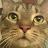 C Santino avatar image