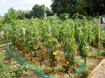 Fruits et légumes dans les jardins ouvriers