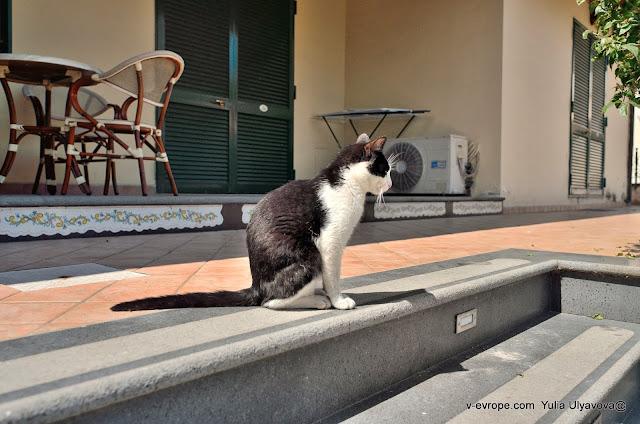 Кошка в Помпеях