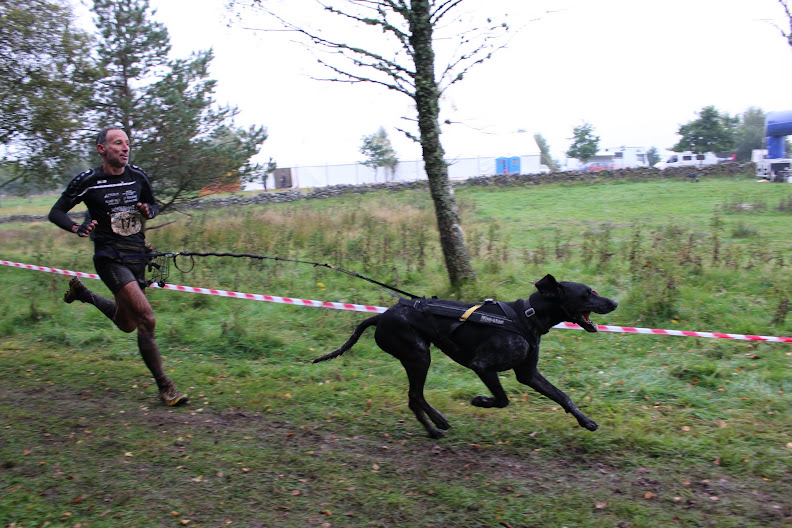 CHIEN D'OR 2015