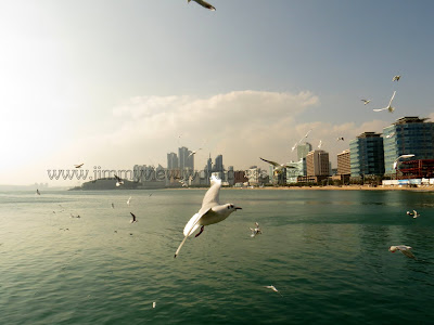 Seagull with a backdrop of Busan