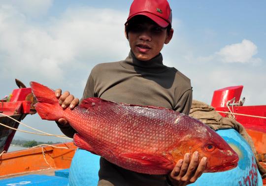 Nhiều loài cá xuất khẩu, có giá trị kinh tế cao cũng giảm giá nghiêm trọng.