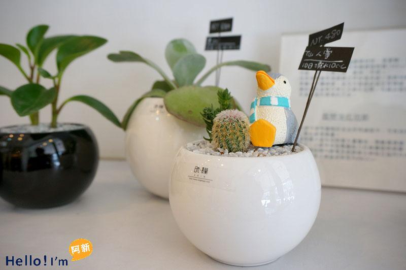 台南盆栽,日光夏蘭植物工房-1