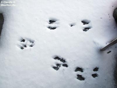 urme de animale pe balcon - veverita