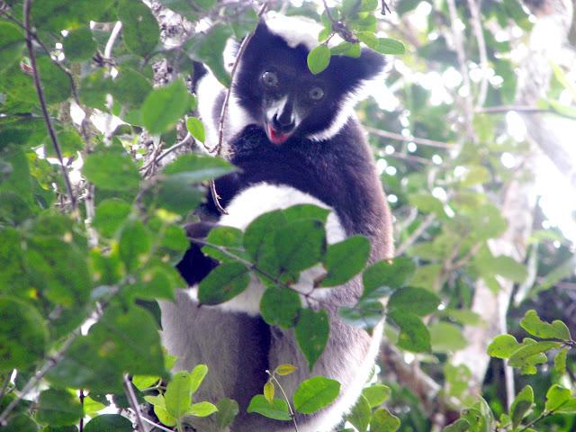 صور من مدغشقر Madagascar 14686643156