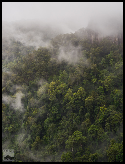 Springbrook Mist