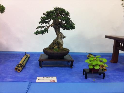 Exposición en Benalmadena IMG_0501