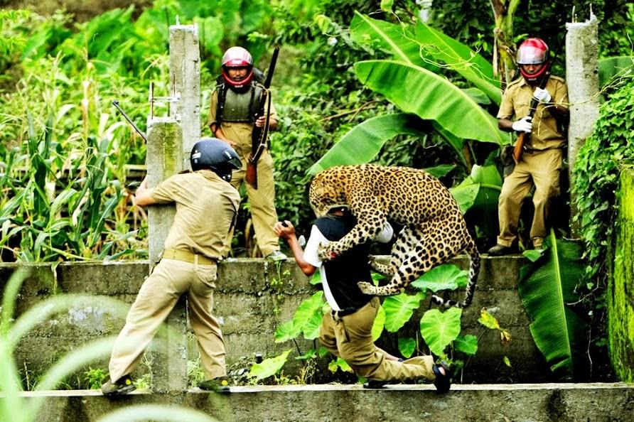 leopardattack.jpg