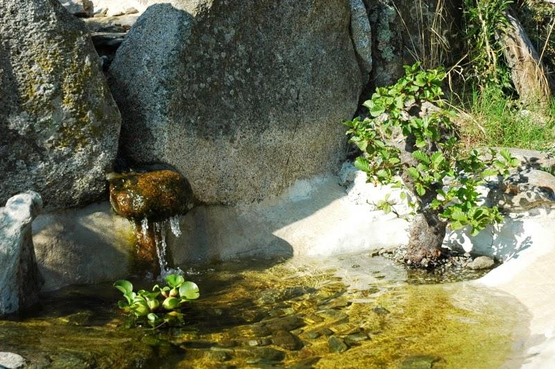 bonsai... a mollo DSC_0621bis