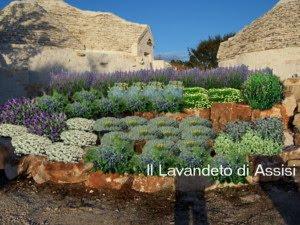 Progetti giardini online gratis progetti giardini privati - Immagini di aiuole da giardino ...