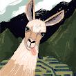 Silvia Y