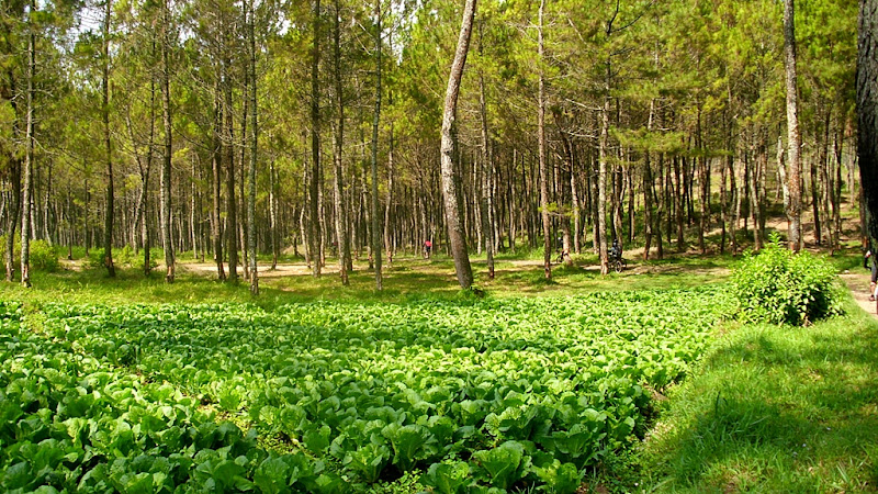 Masih di sekitar hutan pinus, jalanan menurun landai sehingga tidak perlu banyak tenaga untuk gowes.