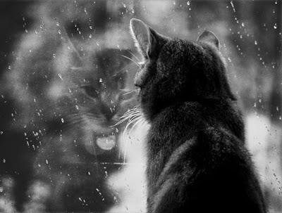 Resultado de imagem para gato ver chuva a cair da janela