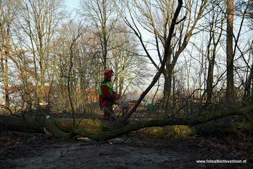 Houtoogst in de bossen van overloon 17-01-2012 (12).JPG