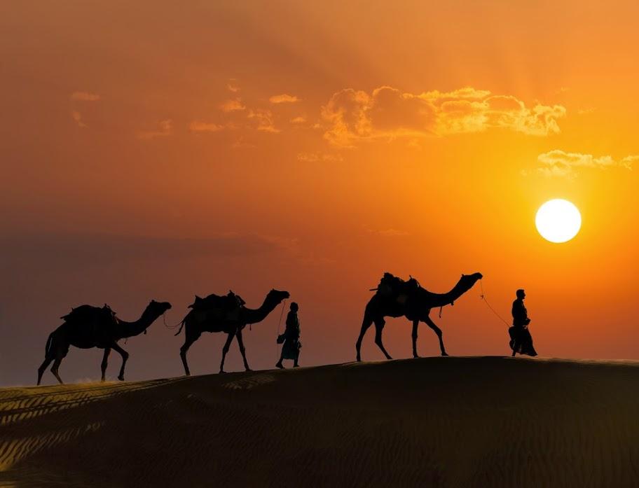 Camel caravan with sunset background in Thar desert