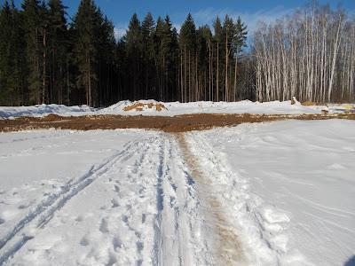 Одинцовская лыжня в Подушкинском лесу