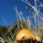 Mushroom on the Cascade Trail (282005)