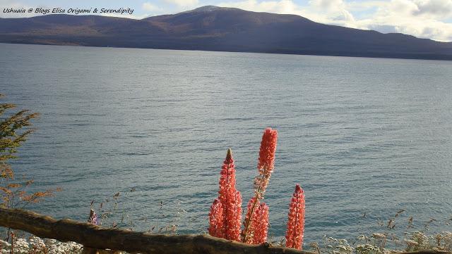 Lago Fagnano, Ushuaia, Argentina, Google Plus, Elisa N, Blog de Viajes, Lifestyle, Travel