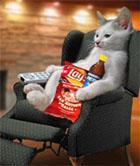 gato sedentario