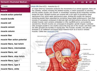 Dorland's Illustrated Medical Dictionary, 32nd Edition (4.0.1) – ipa