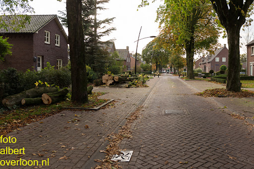 Bomen gekapt Museumlaan in overloon 20-10-2014 (44).jpg