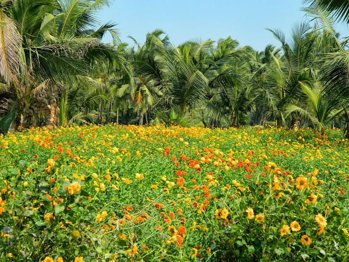 Flower farm on arnala beach