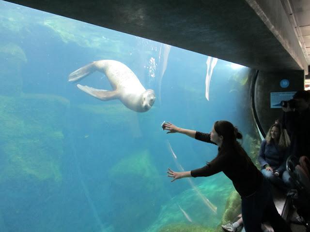 Aquarium Of The Pacific Long Beach Aquarium Of The