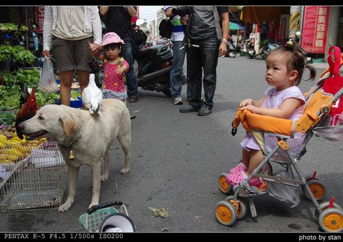 土庫-順天宮與土庫第一市場 看見公雞與公狗的水果攤