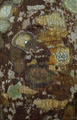 cambodia, photo, lichens, лишайники, Камбоджа,