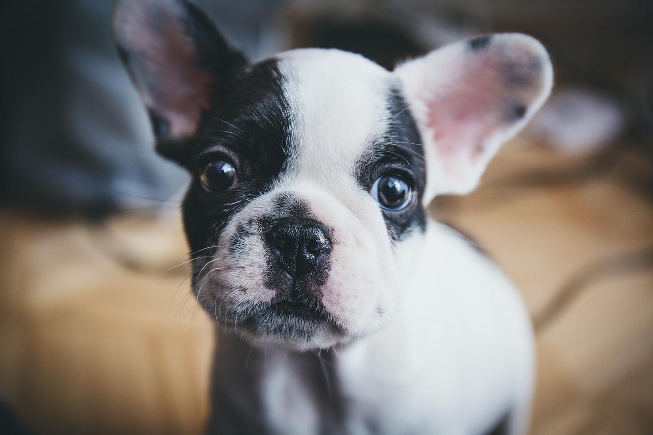 dog-1557287_1280.jpg