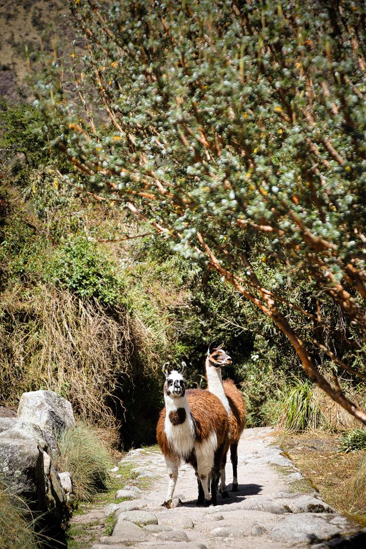 Inca Trail Peru (Best Travel Destinations in the World 2015).
