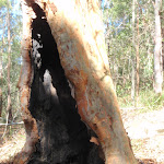Burnt tree recovered (237983)