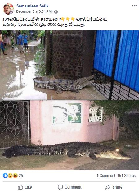 Crocodiles 2.png