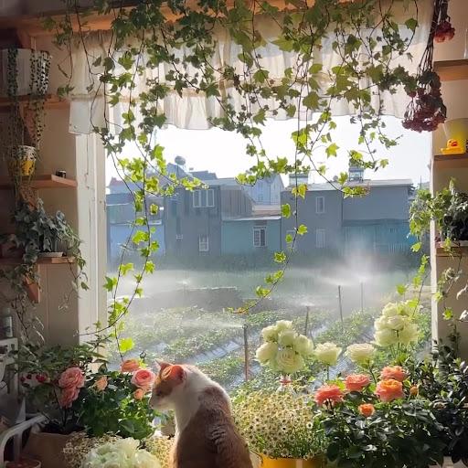 Hadeel TM