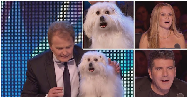 Videos Engraçados de animais: cadela fala e canta no Britain's Got Talent