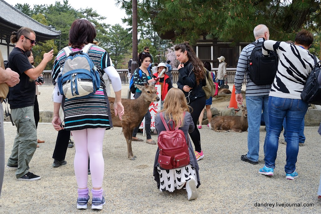 Вколготках гуляют парках видео фото 263-255