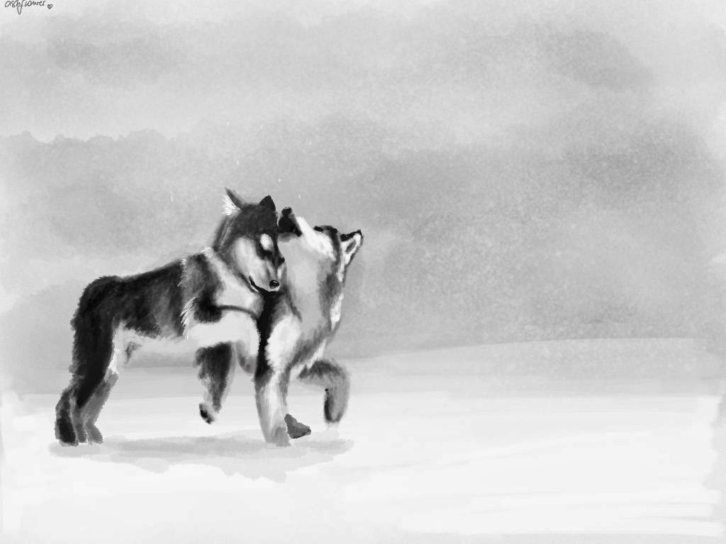 puppies in the snow made with Sketches