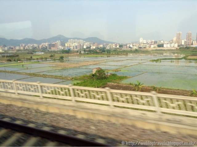 Paddy fields china