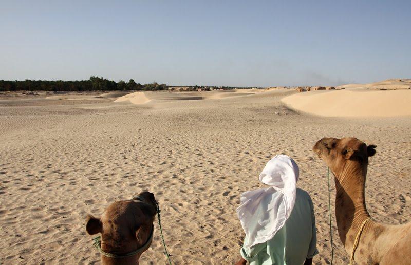 Pormenor das cabeças de dois camelos e do seu condutor, vistos de trás