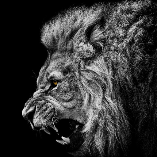 Lionaudio