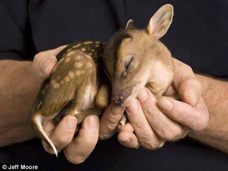 tiny deer 5