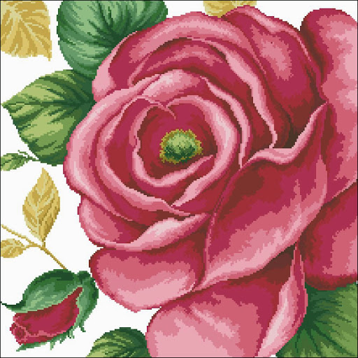Pink Rose chart
