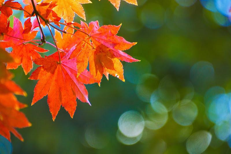 昭和記念公園 日本庭園 紅葉 写真10