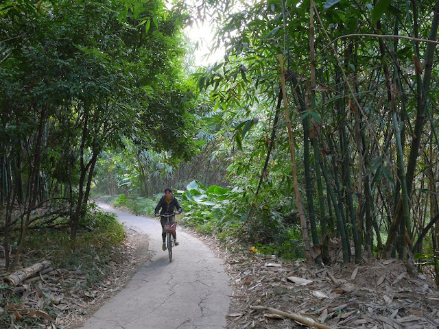 woman riding a bicycle on a narrow paved path through bamboo and trees