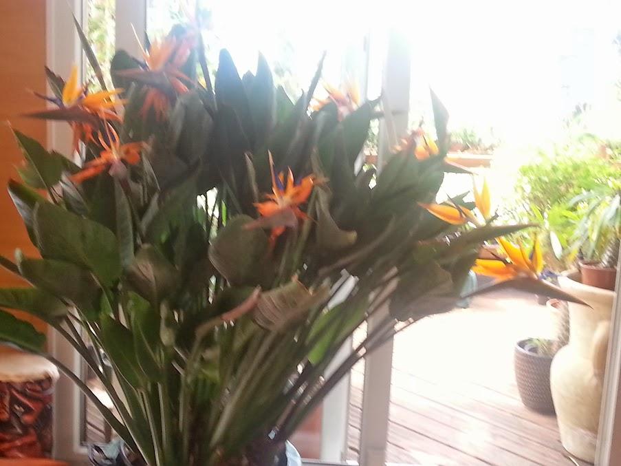 floraisons du mois 20140407_113857