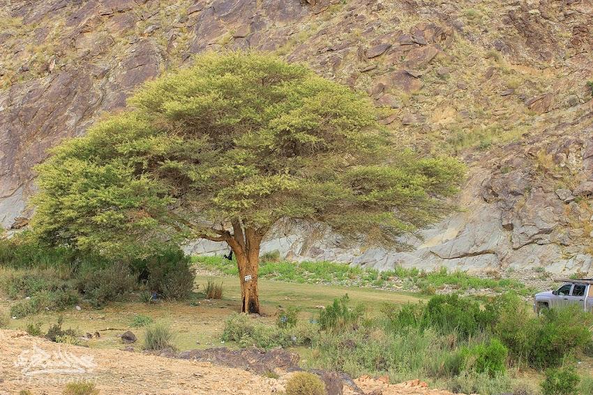 IMG 1555 2 - رحلة لأجمل شلالات السعودية{غُدران الأقْلُت}ببللحمر بعسير21-8-1436