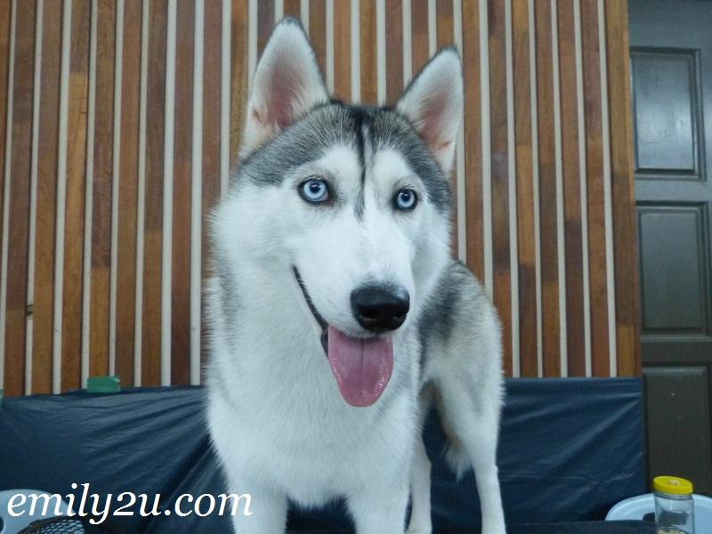 MKA All-Breed Championship Dog Show